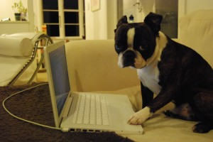 Twitter doggy